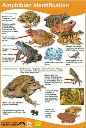 Amphibian ID guide 2014 - for website