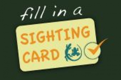 sighting_card