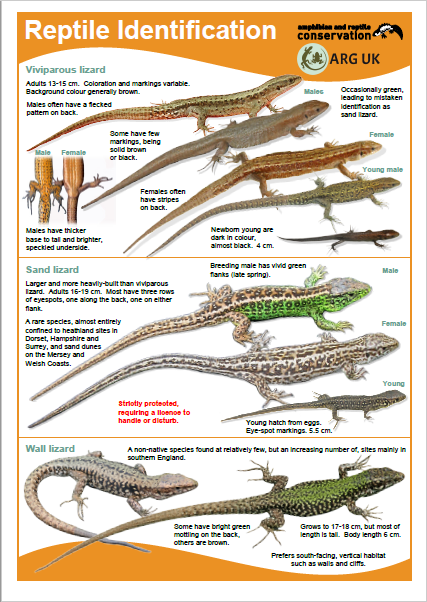 Reptile guide ARC + ARG UK 2019