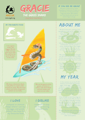 GRACIE fun fact sheet for web high