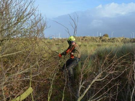 Sefton coast scrub work Dec 13 clearing scrub