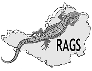 Rags logo Resized for website