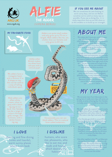 Alfie Adder fun fact sheet for web high